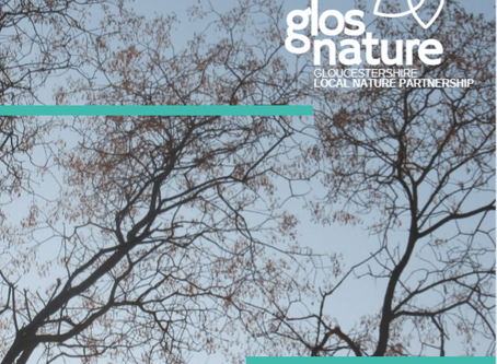 GLNP Ash Dieback Position Statement