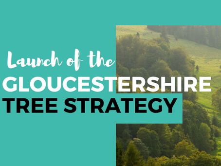 Gloucestershire Tree Strategy Launch event