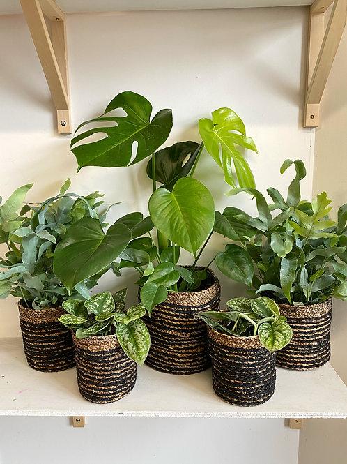 Stripy Basket Planters