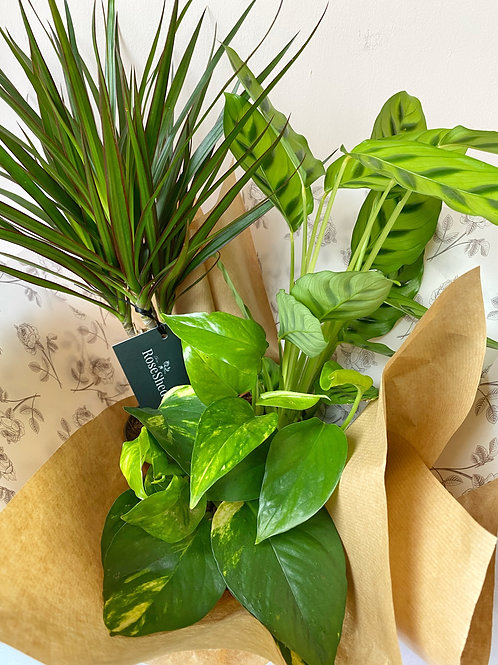 Houseplant Bundle