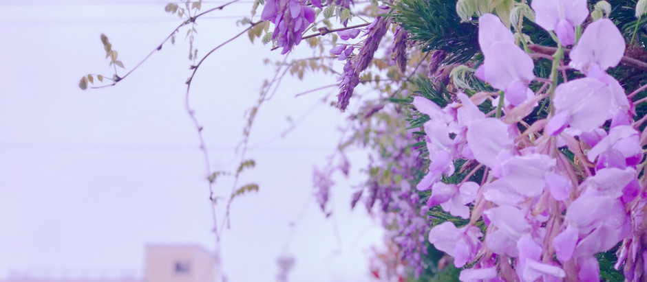 けいめい近況4/1