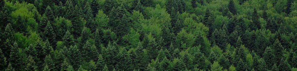 Forest-Section-Banner.jpg