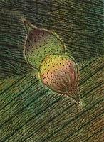 쌍둥이 열매, watercolor on canvas, 33.4 x 24.2 cm, 2013