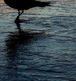 portfoliophotography_edited-64WEB.jpg