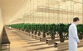 cultivation design.jpg
