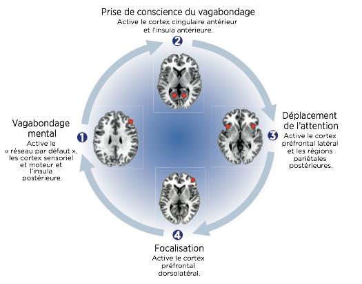 Pleine conscience, cerveau, mental, focalisation, recul, santé, méditation