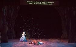 Dew Fairy-3, Opera San Jose