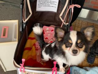 保護犬 啓発活動を再開しました 東京 保護犬 犬 里親募集 子犬 ボランティア