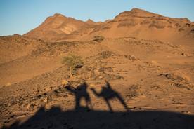 Moroccan Desert Zagora