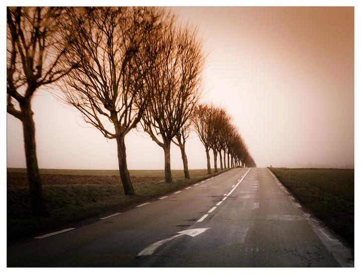 Rue Trees
