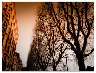 Toulous Tree Line
