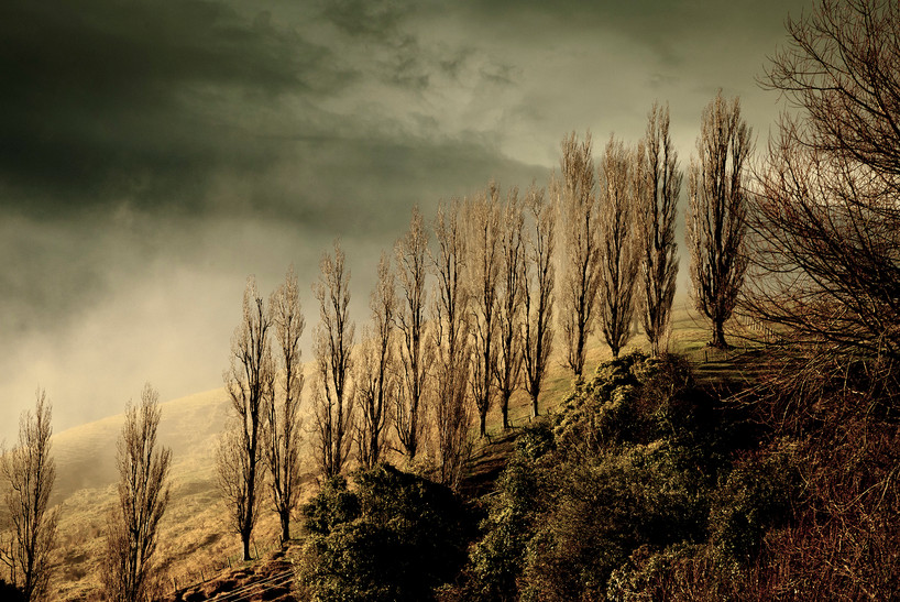 Tree Lined Hill