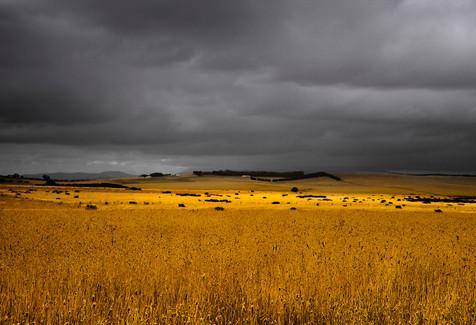 Golden Light SA