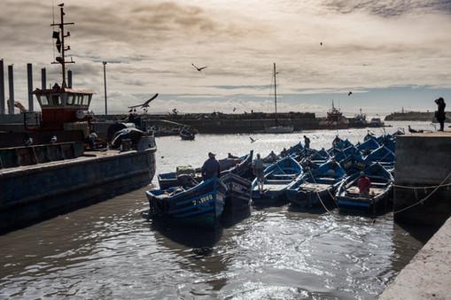 Essouira Fisherman
