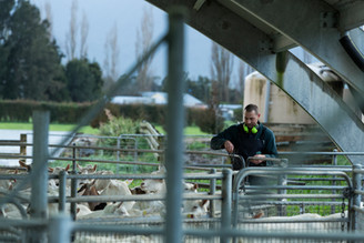 Goat Milking Shed