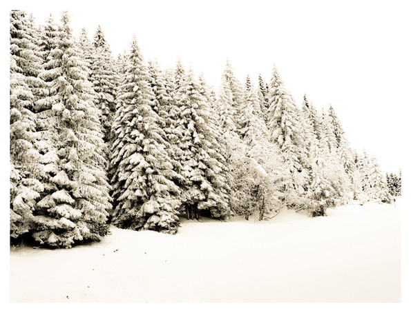 Snowy Row