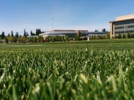 grass-lawn-sports-field-19664.jpg