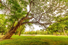 worm-s-eyeview-of-tall-tree-under-a-gray