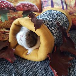 Heia hussassa, der Herbst ist da!