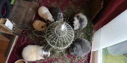 das einzige Bild mit alles sechs Schweinchen