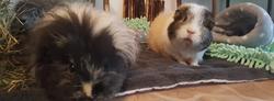 Cooki und Baby Ginger