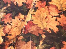 Herbst Herbstlaub Blätter autumn Meerschweinchen