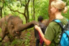 Conservación de elefantes en Tailandia - Viajes Olmeca