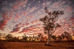 Fortescue Sunset