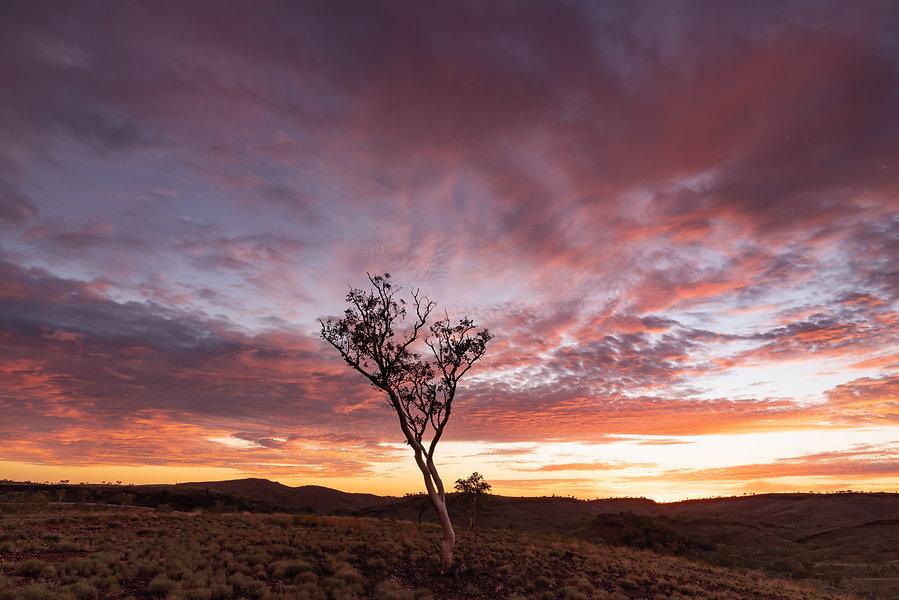 The Pilbara landscape in all it's sunrise glory!