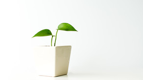 """When """"Green"""" Turns Toxic: 6 Lessons Learned about Setting Healthy Boundaries at Work"""