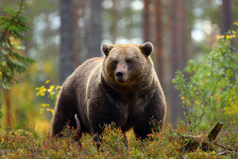 Bear Safety: Camping in a Teardrop