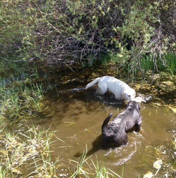 Ollie & Callie creek.jpg