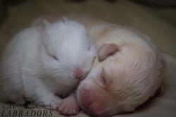 Puppy Bunny 3