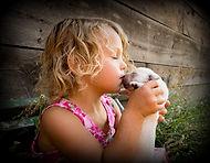 lab puppy, lab breeder idaho, english lab puppy, english lab puppy, english lab breeder