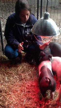 Tay & Pig.jpg