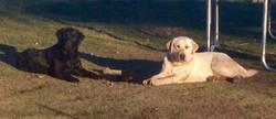 Ollie & Callie