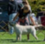 Idaho Lab Breeders I Lab Puppies I Labrador Breeder I English Lab Puppies I English Lab Breeder I Idaho Lab Breeder I Lab Breeder I Lab Puppies I Lab Puppy