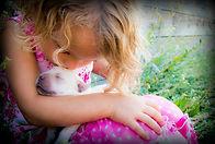 English Lab Puppy, lab breeder idaho, lab puppies idaho, english lab puppy, english lab idaho