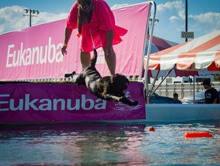 Dock Diving at the Blackfoot Dog Show!