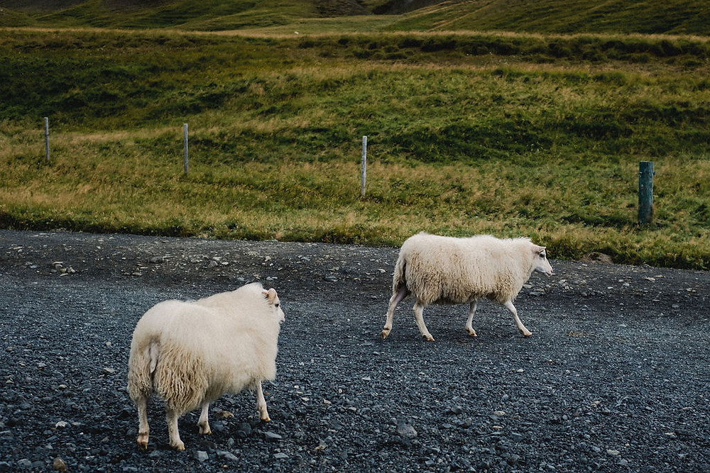 Unique Iceland Wedding photo