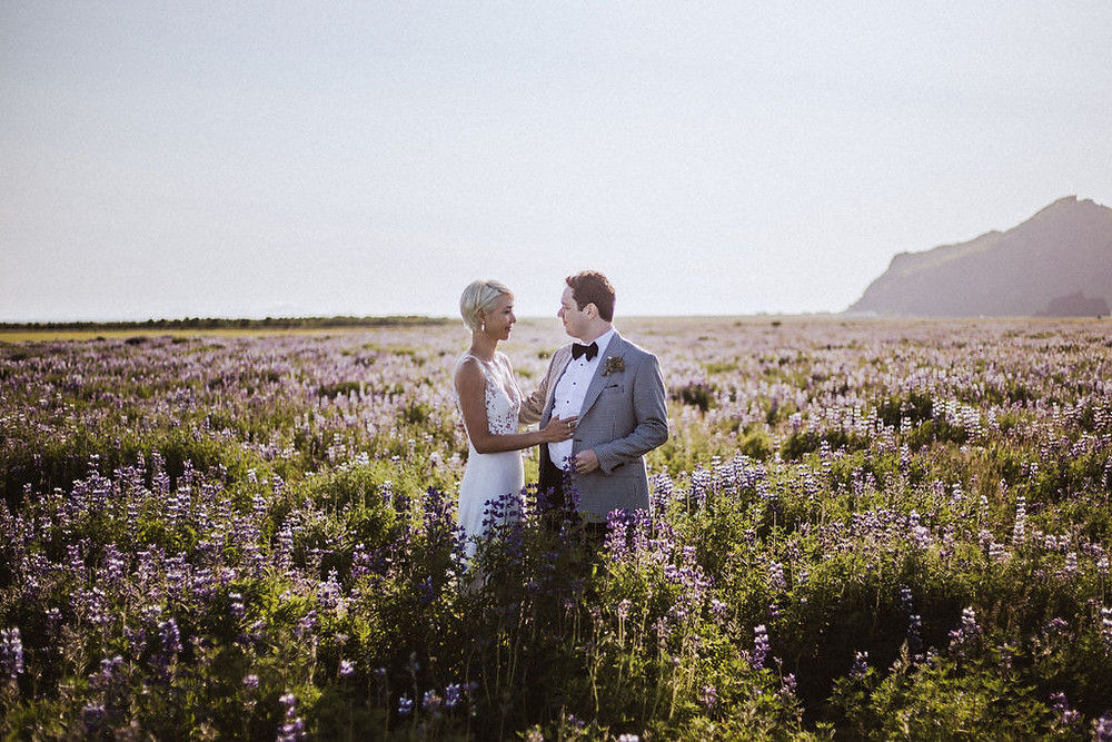 lupine iceland wedding pictures