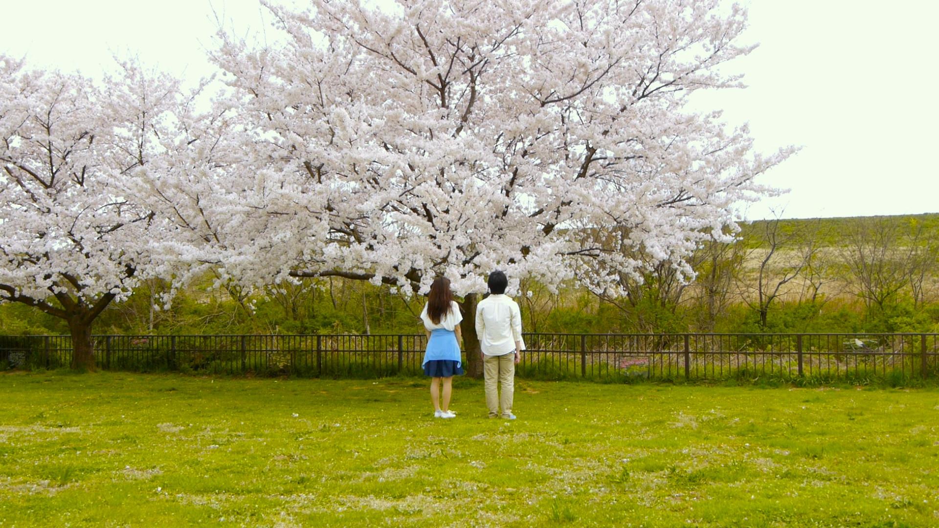 桜桃らんでぶー