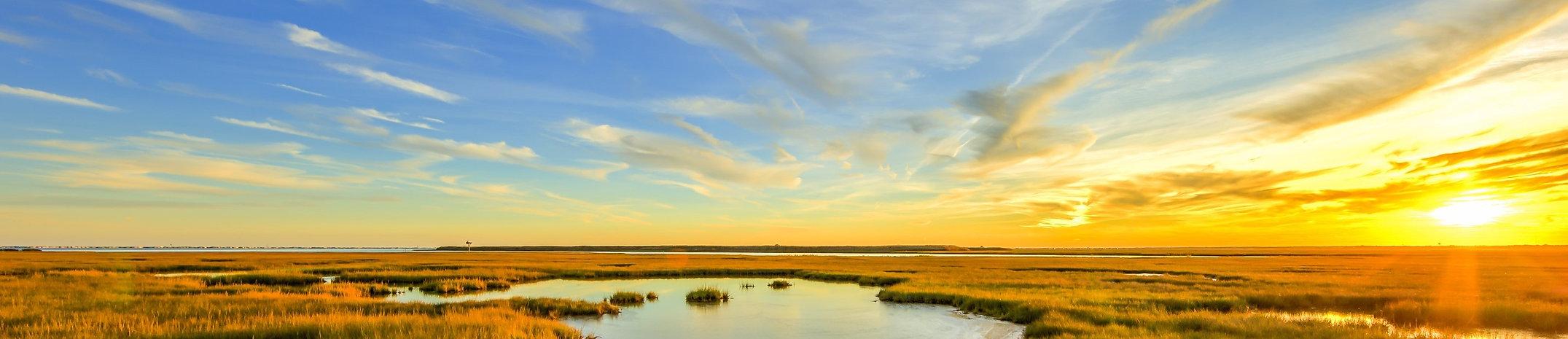 Marsh 2 b.jpg