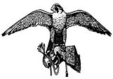 Bird Control, Problems, Pests, Pigeons, Gulls, Free Site Visit, Free Quote