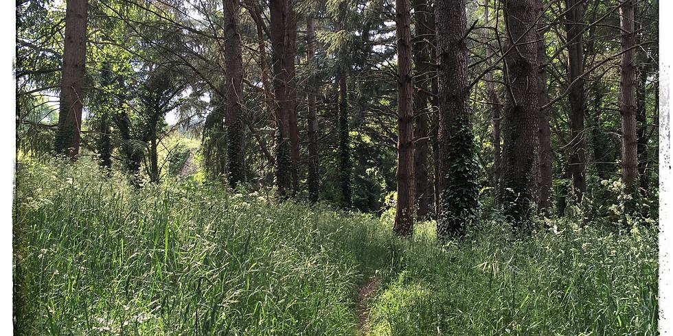 Séance Trail running