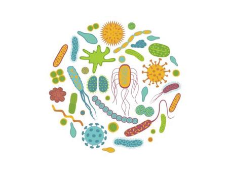 Il Microbiota Vaginale