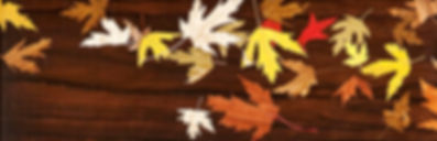 Wind scattered leaves cut from different exotic wods