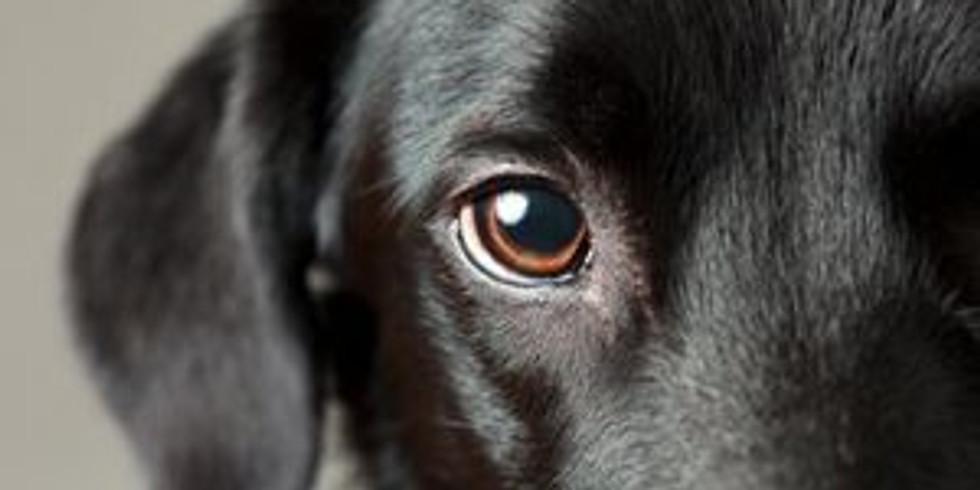 Eye Cerf