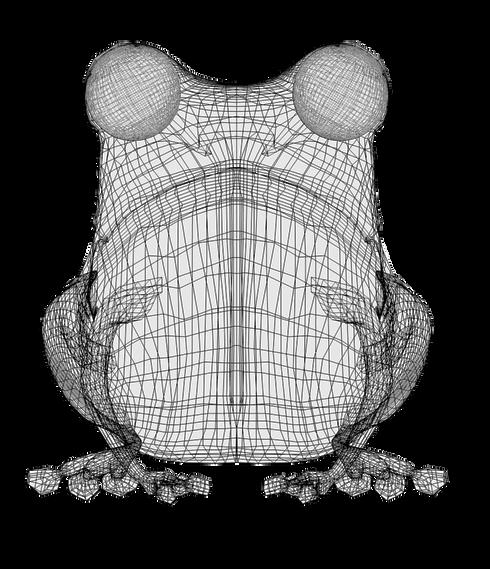 Frog model UV
