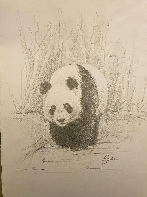 Giant Panda - ORIGINAL DRAWING
